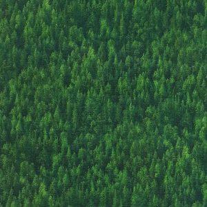 Tela de césped en verdes (1.50)